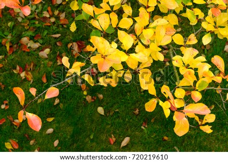 Vibrant Yellow Orange Brown Leaves Early Stock Photo (Edit