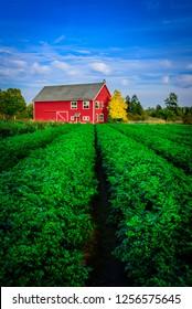 A vibrant yet simplistic scene of a farm in British Columbia.