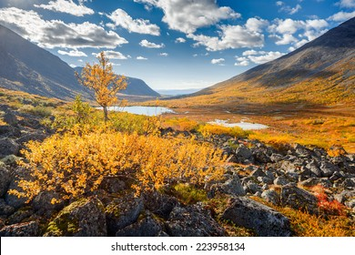 Vibrant-yellow birch tree in front of colorful autumn tundra in Malaya Belaya river valley in Hibiny mountains above the Arctic Circle, Russia