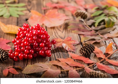 viburnum berries with autumn leaves on wooden background. Autumn concept food agriculture, harvesting, cooking. Red fruits of the Viburnum opulus