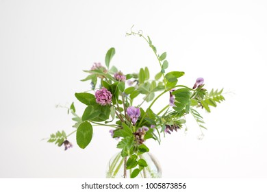 Vicia cracca flowers in a glass vase on a white background