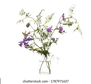 Vicia villosa (fodder vetch or winter vetch) in a glass vessel with water
