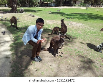 VICTORIA, AUSTRALIA - APRIL, 2015: Students from South East Asia visiting a wild zoo in Melbourne, Australia and play with various kinds of wild animal such as Kangaroos, coalas...