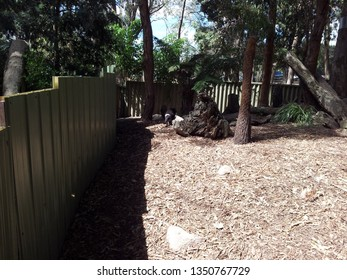 VICTORIA, AUSTRALIA - APRIL, 2015: A wild zoo in Victoria where lived various kinds of animal such as kangaroos, coalas...