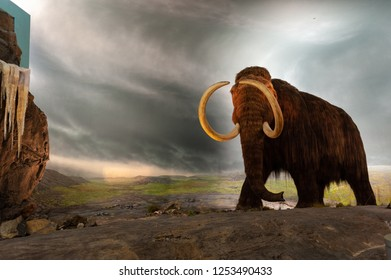 Victoria, British Columbia / Canada - September 28 2018: Woolly mammoth replica in the Natural History gallery of the Royal BC Museum, Victoria