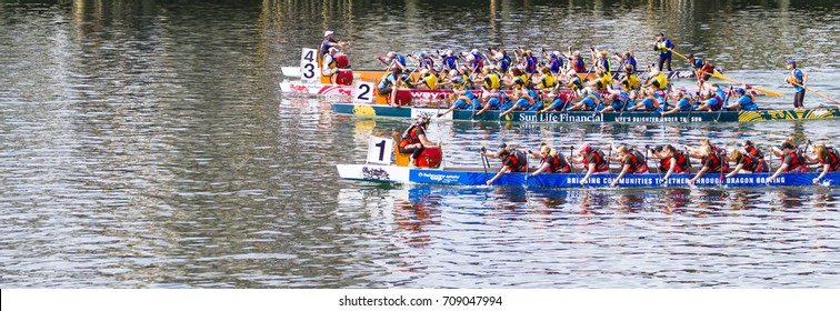 VICTORIA CANADA  AUG 20 17: The annual  Victoria Dragon Boat Festival. One of Victoria most spectacular summer festivals and the only dragon boat festival in Canada to take place in a working harbour.
