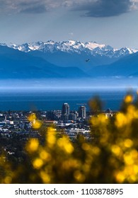 Victoria, the capital of BC, Canada, as seen from Mount Douglas. Yellow flowers in background, skyline in middle, mountains and ocean in background. Hydroplane, diversity, colorful. Portrait layout.