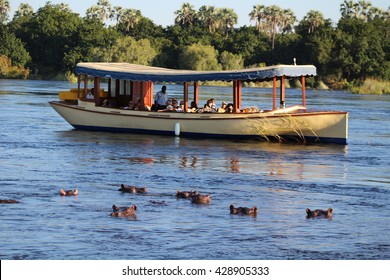 VICTORIA FALLS, ZIMBABWE - 8 MAY 2016: A boat loaded with tourists views a herd of hippos on the Zambezi River, the border between Zambia and Zimbabwe, Africa.