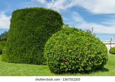 Vienna, Austria - July 23, 2017: Beautiful decorative green bushes in Maria Theresien Platz Park in Vienna, Austria