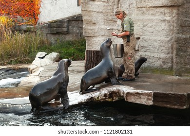 Vienna, Austria - November 3, 2015: Zoo keeper f the Vienna Zoo feeds sea lions with fresh fish