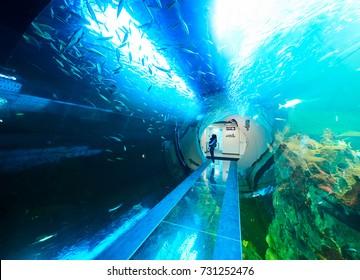 VIENNA, AUSTRIA - SEPTEMBER 8, 2017. Giant panoramic marine fishtank at Haus des Meeres zoo in Vienna, Austria