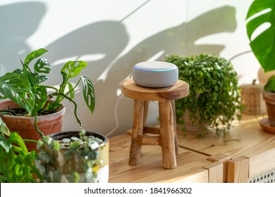 VIENNA,AUSTRIA - October 26 : A white Amazon Alexa Echo on a wooden cupboard with green plants in the background