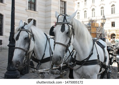 Viennese horse drawn carriage for a tour through the town centre