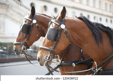 Viennese horses