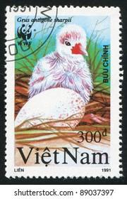 VIET NAM - CIRCA 1991: stamp printed by Viet Nam, shows Grus antigone chick, circa 1991