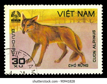 VIETNAM - CIRCA 1981: A stamp printed in VIETNAM shows Cuon Alpinus, series, circa 1981