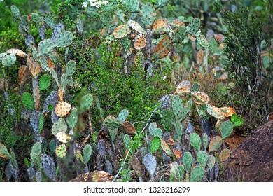 Vietnam, Da Lat, colorful cactus plants.