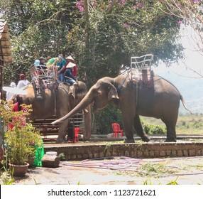 VIETNAM, DALAT - MARCH 26, 2018: Elephant for riding tourists in Pren Park