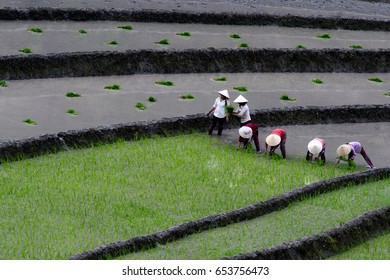 Vietnam - May 2017 : people on paddy field