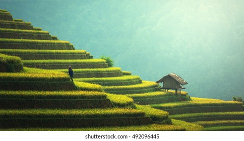 Vietnam Rice fields on terraced of Mu Cang Chai, YenBai, Vietnam. Rice fields prepare the harvest at Northwest Vietnam.Vietnam landscapes
