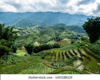 Vietnam Sapa Rice fields beautiful view