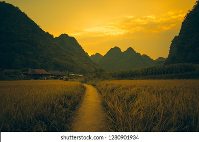 Vietnam traditional house in northern Vietnam. Yellow rice field in village, countryside in Vietnam. Royalty high-quality free stock image of yellow rice fields prepare harvest in valley and mountains