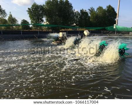 Vietnamese Aquacuture Systems Intensive Shrimp Culture Stock