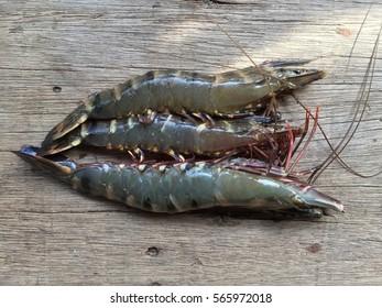 Vietnamese black tiger shrimp, Penaeus monodon