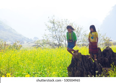 Vietnamese ethnic Hmong children are seen playing in the middle of the canola field in Moc Chau Highland, Vietnam on Nov 29, 2016.
