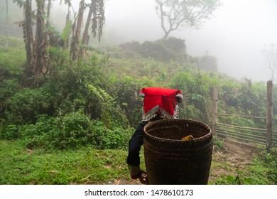 Vietnamese Ethnicity Images, Stock Photos & Vectors