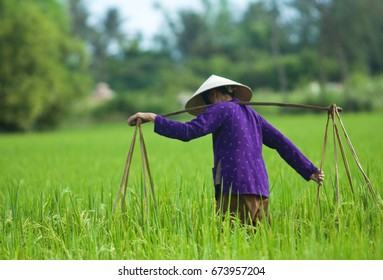 Vietnamese farmer with cone hat in the rice fields.
