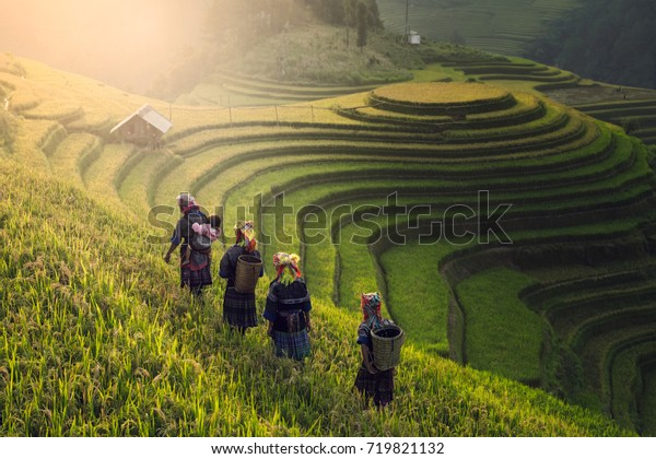 Vietnamese farmers walking over rice paddy field on sunset at Mu Cang Chai, Yenbai, Vietnam