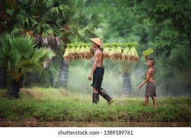 The Vietnamese father is working at his rice fields.