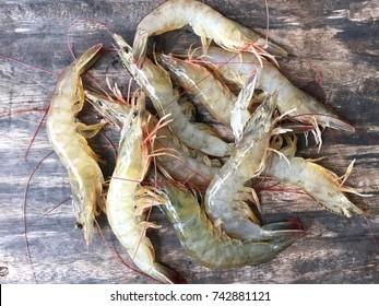Vietnamese whiteleg shrimp, Litopenaeus vannamei