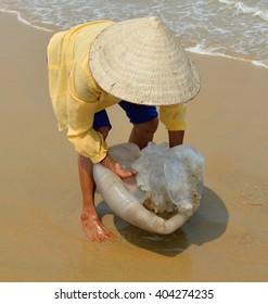 Vietnamese woman catching jellyfish