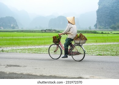 Vietnamese woman at conical hat on bicycle going for work at rice field. Ninh Binh, Vietnam travel landscapes and destinations