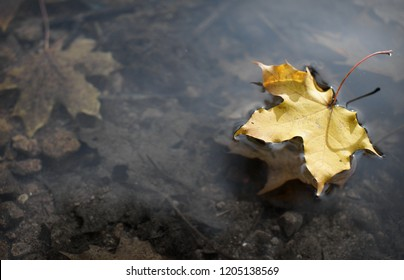 View from above of bright yellow maple leaf on still water surface in autumn park, on background of grey brown leaves under water at the bottom, mirror reflection of maple leaf in water