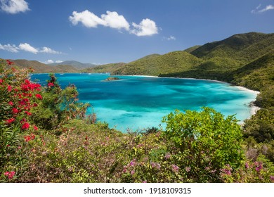 View above Cinnamon Bay with foreground flowers on the island of St. John in the United States Virgin Islands.
