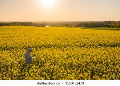 View from above. A farmer in his rapeseed field at sunset examines his crops. Using a digital tablet