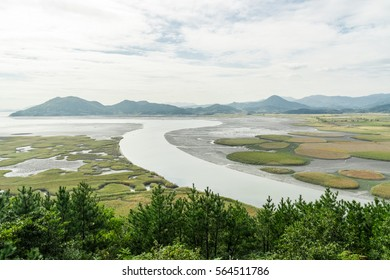 View from above of the field of reeds in the wetlands of Suncheon or Suncheonman bay Wetland reserve formerly ecological park in South Korea in autumn with a cloudy sky and vibrant green colors