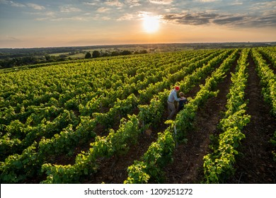 View from above . A french winegrower and his young son in their vines at sunset. He teaches his son the job