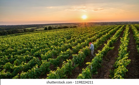 View from above . A french winegrower working in his vineyards at sunset.