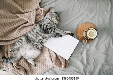 View from above of funny cat sleeping on the blanket  on hygge background. Cozy Flatlay of female blogger. Scandinavian style, hygge concept.