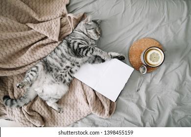 Blick von oben auf lustige Katzen, die auf der Decke auf hellbraunem Hintergrund schlafen. Gemütliches Flatlay von Bloggerin. Skandinavischer Stil, Mischkonzept.