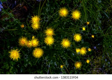 view from above of luminous yellow flowers in uncultivated countryside field