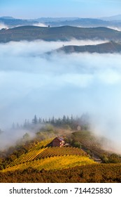 View from above on colorful autumnal vineyards and morning fog covering hills of Piedmont, Northern Italy.