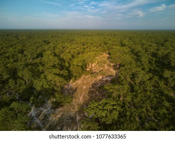 View from above on Moremi forest, Botswana. Typical ecosystem, part of Okavango delta, aerial photography. Vast wilderness without people, animal paradise. African wildlife photography.