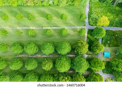 View from above on the treetops of deciduous trees