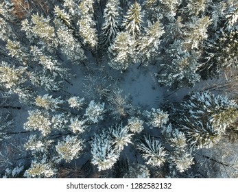 View from above on a winter forest on a cold sunny day