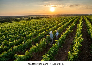 View from above. Two French winegrowers in their vineyards at sunset.